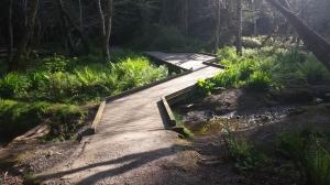 Bridge in Sequoia Park